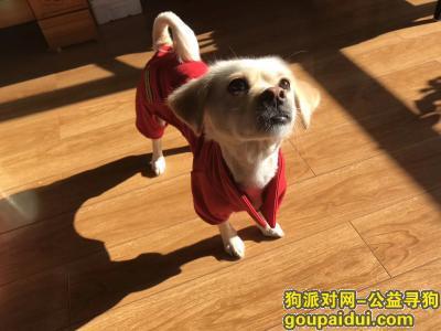 延边寻狗启示,家里小狗丢了,重金找狗,它是一只非常可爱的宠物狗狗,希望它早日回家,不要变成流浪狗。