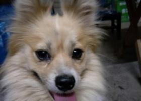 寻狗启示,小狗丢失,往好心人帮忙,必有重谢,它是一只非常可爱的宠物狗狗,希望它早日回家,不要变成流浪狗。