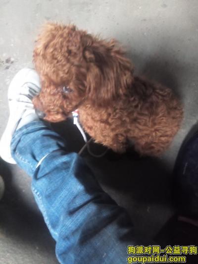 长春找狗主人,长春北四环青年路交汇四间房145路终点站捡到小狗一只,它是一只非常可爱的宠物狗狗,希望它早日回家,不要变成流浪狗。