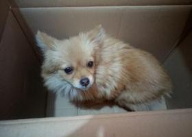 寻狗启示,11月22日晚上在陶然公园捡到的,它是一只非常可爱的宠物狗狗,希望它早日回家,不要变成流浪狗。