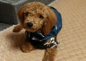 寻狗启示,寻找狗狗的主人,大家帮忙转发,它是一只非常可爱的宠物狗狗,希望它早日回家,不要变成流浪狗。