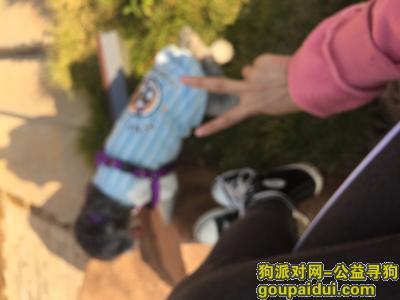 岳阳丢狗,帮帮忙抱走狗狗的还给我谢谢了,它是一只非常可爱的宠物狗狗,希望它早日回家,不要变成流浪狗。