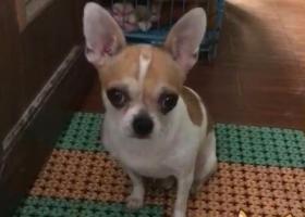 寻狗启示,寻找爱狗,狗狗年龄三岁半了,它是一只非常可爱的宠物狗狗,希望它早日回家,不要变成流浪狗。