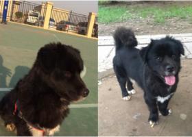武汉市 武昌区武泰闸花园小区酬谢五千元寻找狗狗