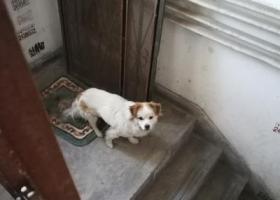 寻狗启示,寻狗主人~狗狗一直在楼道,它是一只非常可爱的宠物狗狗,希望它早日回家,不要变成流浪狗。