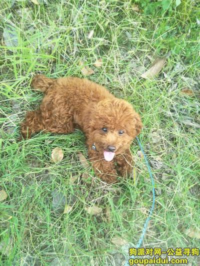 宜春丢狗,求大家谁看到了或者捡到了麻烦联系一下我,谢谢了,它是一只非常可爱的宠物狗狗,希望它早日回家,不要变成流浪狗。