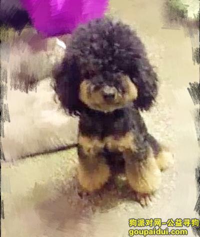 枣庄找狗,养了四五年的泰迪,感情深厚,它是一只非常可爱的宠物狗狗,希望它早日回家,不要变成流浪狗。
