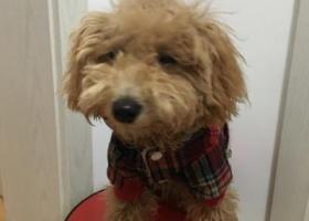 寻找穿红、黑相间衣服 屁股口袋有米字图案的狗狗