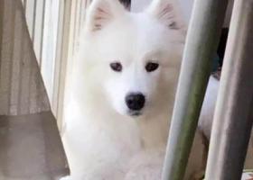 寻狗启示,人狗情未了   寻爱犬,它是一只非常可爱的宠物狗狗,希望它早日回家,不要变成流浪狗。