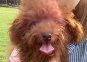寻狗启示,寻找爱狗,你快回家吧,它是一只非常可爱的宠物狗狗,希望它早日回家,不要变成流浪狗。