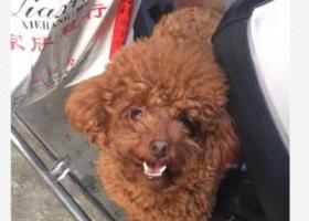 寻狗启示,寻找爱犬,快回家吧宝贝❤️,它是一只非常可爱的宠物狗狗,希望它早日回家,不要变成流浪狗。
