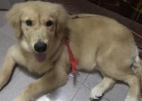 寻狗启示,重金寻找爱狗多多,它是一只非常可爱的宠物狗狗,希望它早日回家,不要变成流浪狗。