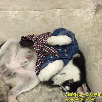 寻狗启示,主人我想你了!找到者重金酬谢,它是一只非常可爱的宠物狗狗,希望它早日回家,不要变成流浪狗。