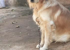寻狗启示,寻狗启示  望爱心人多多留意转发,它是一只非常可爱的宠物狗狗,希望它早日回家,不要变成流浪狗。