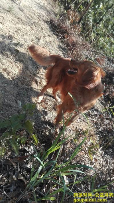 潮州寻狗网,寻狗启示,潮州磷溪凤美村附近,它是一只非常可爱的宠物狗狗,希望它早日回家,不要变成流浪狗。