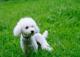 寻狗启示,服务(小姐)啪啪啪找一晚上全套真有,它是一只非常可爱的宠物狗狗,希望它早日回家,不要变成流浪狗。