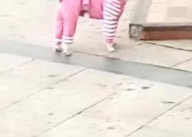 寻狗启示,商丘市梁园区行署家属院重金寻找贵宾,它是一只非常可爱的宠物狗狗,希望它早日回家,不要变成流浪狗。