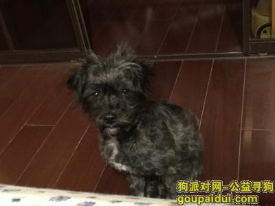 台州找狗主人,台州内环线,小狗自己跳上车来,,它是一只非常可爱的宠物狗狗,希望它早日回家,不要变成流浪狗。