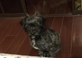 寻狗启示,台州内环线,小狗自己跳上车来,,它是一只非常可爱的宠物狗狗,希望它早日回家,不要变成流浪狗。