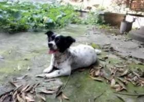 12月8号我家狗狗在百草路附近