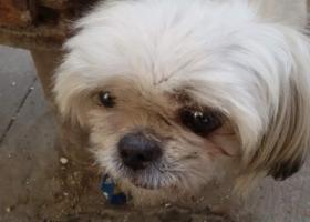 寻狗启示,本人12月8号在珠江路捡到狗狗,它是一只非常可爱的宠物狗狗,希望它早日回家,不要变成流浪狗。