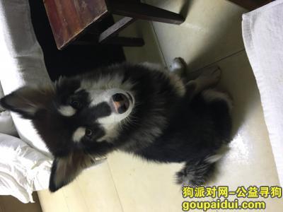 【扬州找狗】,寻找爱狗 提米 重金求谢,它是一只非常可爱的宠物狗狗,希望它早日回家,不要变成流浪狗。
