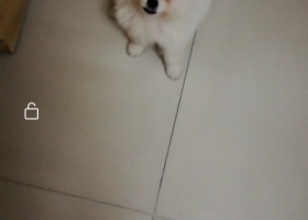 寻狗启示,急寻八里庄小广场附近走丢的狗狗,它是一只非常可爱的宠物狗狗,希望它早日回家,不要变成流浪狗。