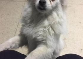 寻狗启示,2017年12月11日在301医院东门捡到一条狗狗,它是一只非常可爱的宠物狗狗,希望它早日回家,不要变成流浪狗。
