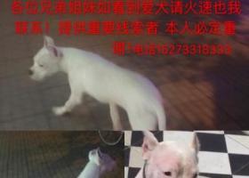 寻狗启示,寻狗启示,白色杜高犬5个多月大,它是一只非常可爱的宠物狗狗,希望它早日回家,不要变成流浪狗。