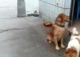 寻狗启示,求帮忙查图片找地址寻狗,在佛山石湾周边或禅城南沙街周边,它是一只非常可爱的宠物狗狗,希望它早日回家,不要变成流浪狗。