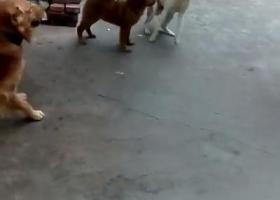 寻狗启示,求帮忙查图片找地址寻狗,在佛山石湾周边或禅城周边,它是一只非常可爱的宠物狗狗,希望它早日回家,不要变成流浪狗。