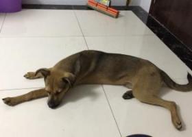 寻狗启示,无锡寻狗启示,急急急,它是一只非常可爱的宠物狗狗,希望它早日回家,不要变成流浪狗。