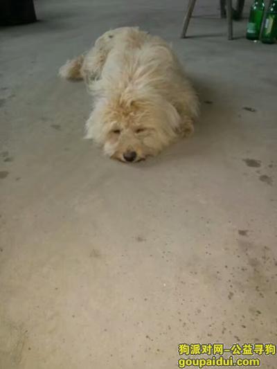 黄冈找狗,寻找爱犬嘟嘟,一只很聪明的狗狗,它是一只非常可爱的宠物狗狗,希望它早日回家,不要变成流浪狗。