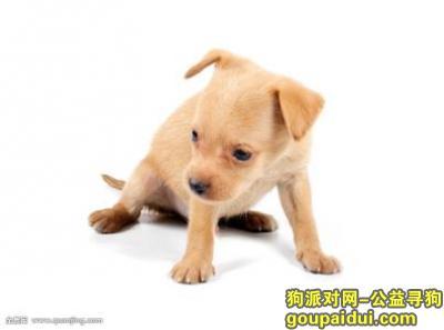 宁波找狗,寻找我的小狗狗,前天掉了,它是一只非常可爱的宠物狗狗,希望它早日回家,不要变成流浪狗。