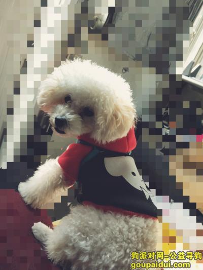 龙岩寻狗网,宝贝回家,帮忙找找狗狗,它是一只非常可爱的宠物狗狗,希望它早日回家,不要变成流浪狗。