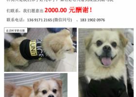 2000元酬金公明寻狗