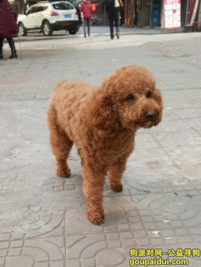 内江寻狗启示,威远严陵镇寻狗启示!!!,它是一只非常可爱的宠物狗狗,希望它早日回家,不要变成流浪狗。