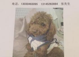寻狗启示,公狗2岁多和主人感情很深,它是一只非常可爱的宠物狗狗,希望它早日回家,不要变成流浪狗。