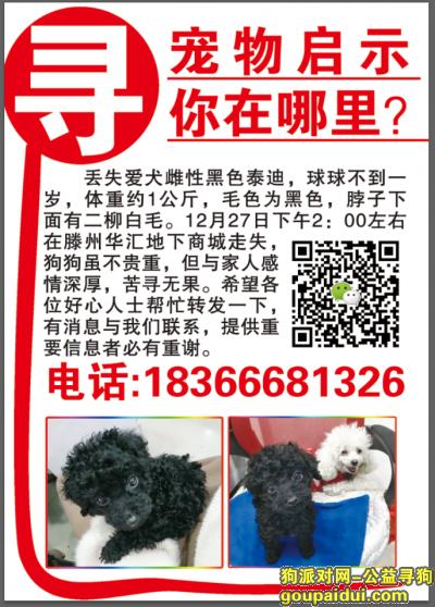 枣庄寻狗网,滕州火车站华汇购物广场主街丢失黑色泰迪,它是一只非常可爱的宠物狗狗,希望它早日回家,不要变成流浪狗。