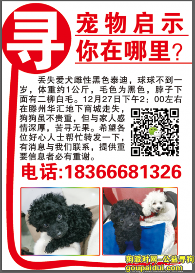 枣庄找狗,滕州市火车站华汇购物广场主街走失黑色泰迪,它是一只非常可爱的宠物狗狗,希望它早日回家,不要变成流浪狗。