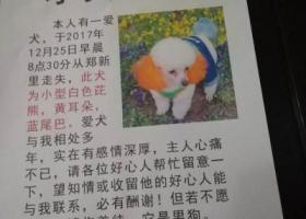 2017.12.28寻狗,南关街郑新里丢失一爱犬