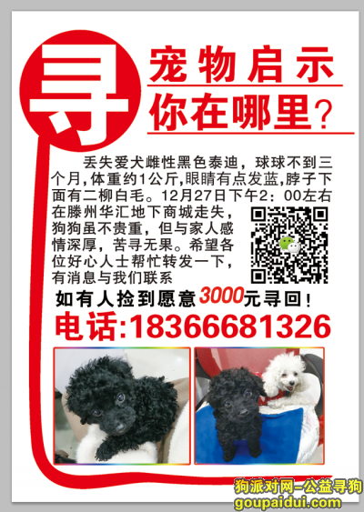 枣庄寻狗启示,3000元起寻回未满三个月黑色泰迪球球,它是一只非常可爱的宠物狗狗,希望它早日回家,不要变成流浪狗。