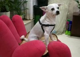 寻狗启示,我找我家狗狗酷比,酷比我爱你,它是一只非常可爱的宠物狗狗,希望它早日回家,不要变成流浪狗。