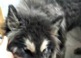 寻狗启示,2018.1.02在邱隘附近捡到,它是一只非常可爱的宠物狗狗,希望它早日回家,不要变成流浪狗。