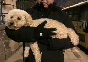 寻狗启示,朋友圈转发   捡到泰迪  金海广场海边,它是一只非常可爱的宠物狗狗,希望它早日回家,不要变成流浪狗。