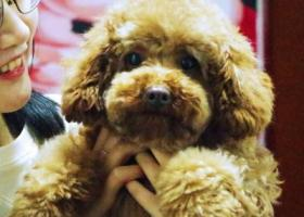寻狗启示,寻狗启事!找到后必会酬谢!,它是一只非常可爱的宠物狗狗,希望它早日回家,不要变成流浪狗。
