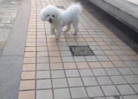 寻狗启示,痛失爱狗!已经找了三天了!,它是一只非常可爱的宠物狗狗,希望它早日回家,不要变成流浪狗。