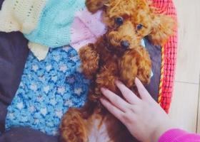重庆市大渡口区寻求爱犬!