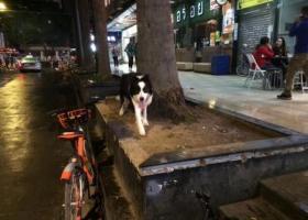 寻狗启示,荔湾区小梅大街维袁前面花基有只黑身白颈中大型狗狗,好像是走失了,一直转来转去好慌[心碎]大家附近的朋友麻烦帮忙扩散一下,天好冷还下雨的,希望早点找到狗主人。,它是一只非常可爱的宠物狗狗,希望它早日回家,不要变成流浪狗。