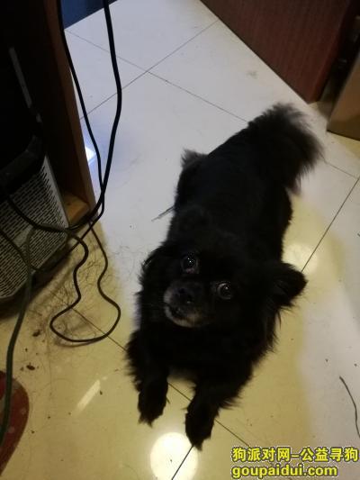 镇江寻狗启示,寻找小黑狗,嘴部一圈白毛,宝塔路,镇江,广东山庄,它是一只非常可爱的宠物狗狗,希望它早日回家,不要变成流浪狗。